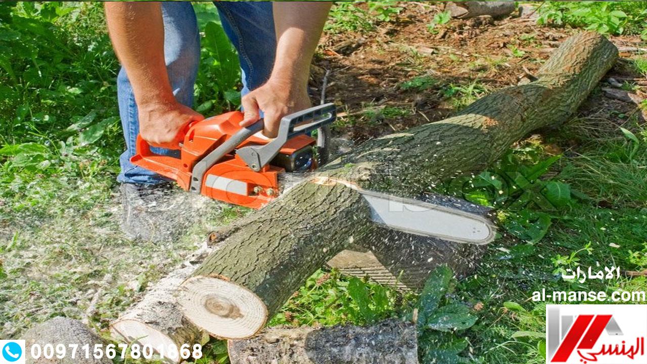 قطع ااشجار 4