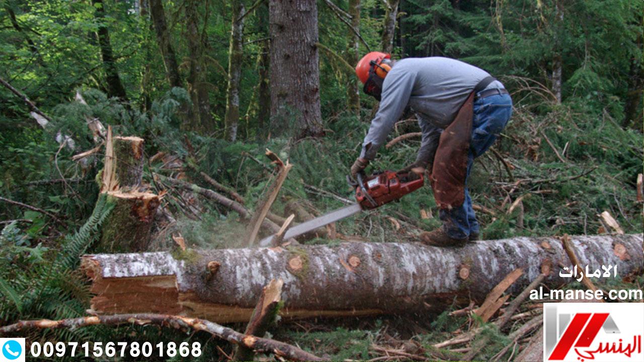قطع الاشجار 10