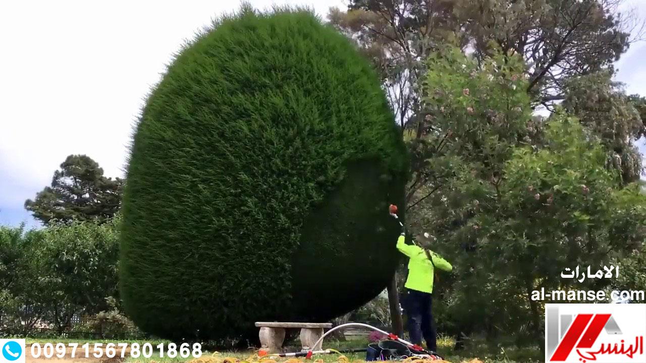 قطع الاشجار 17
