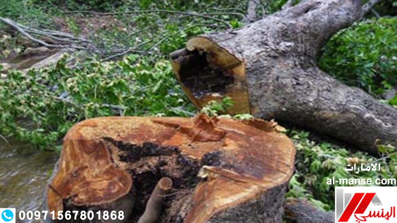 قطع الاشجار 18