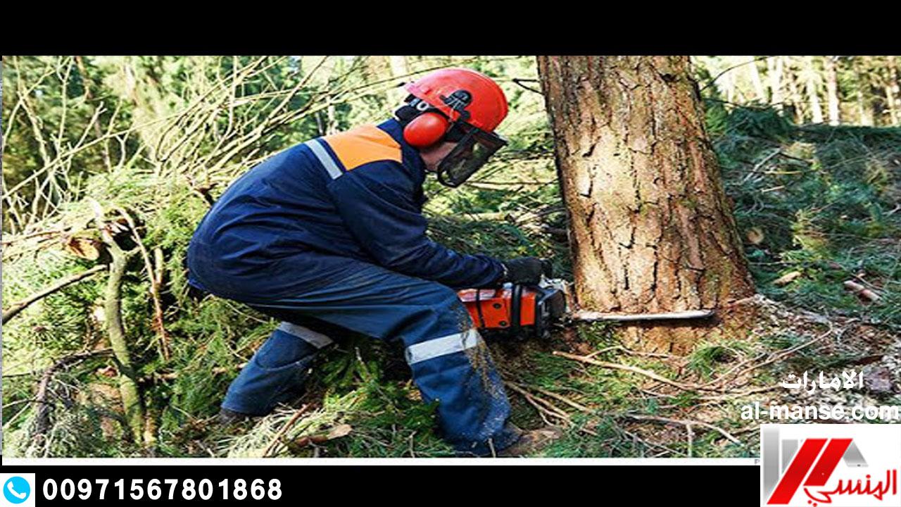 قطع الاشجار 21