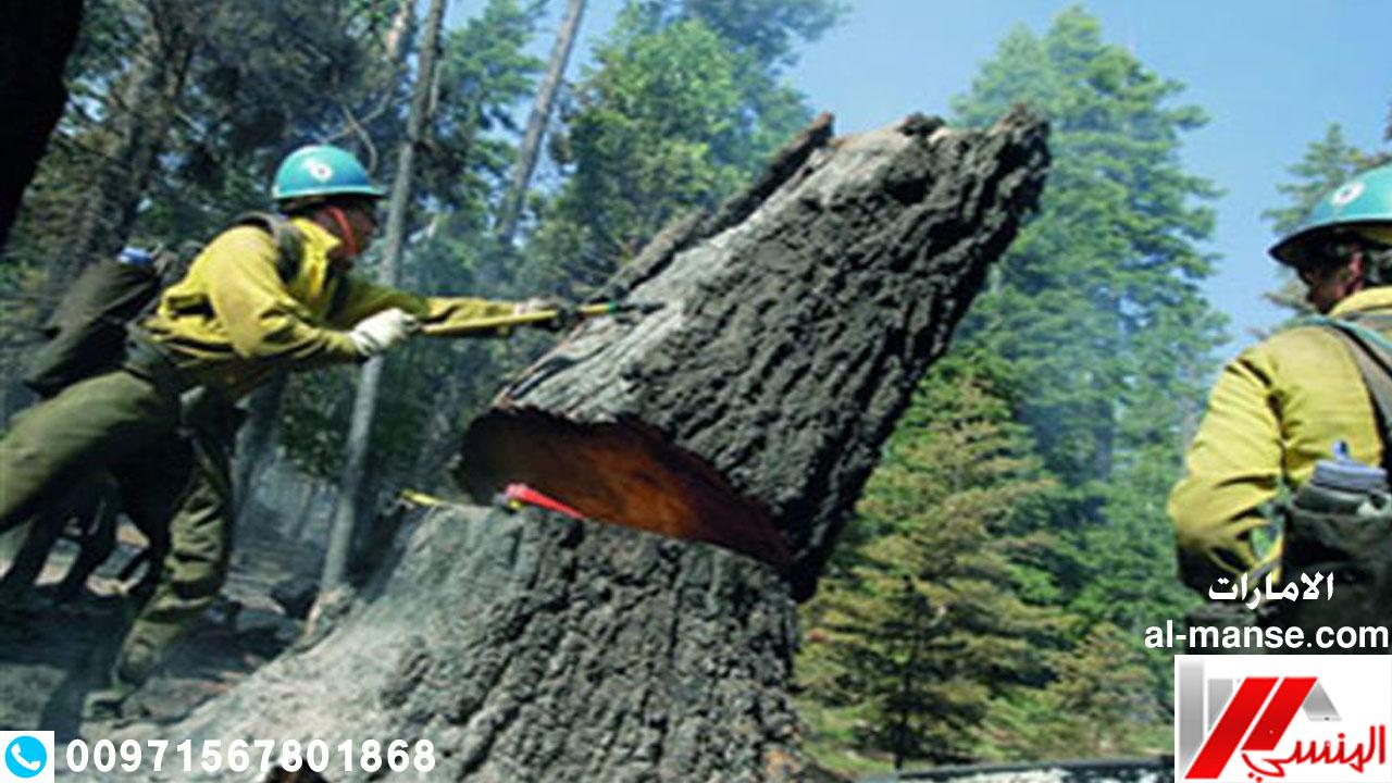 قطع الاشجار 24