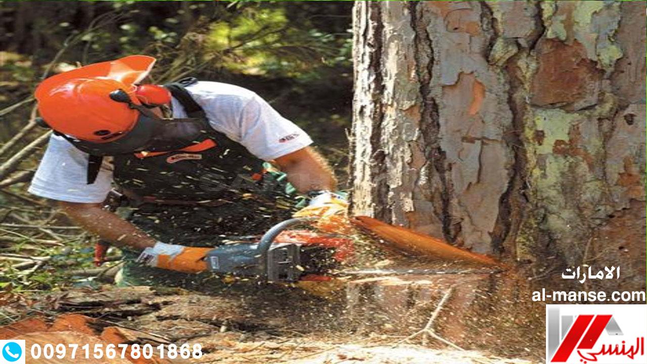 قطع الاشجار 3