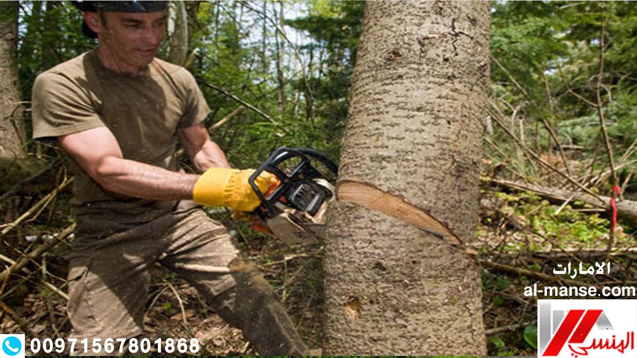 قطع الاشجار 9