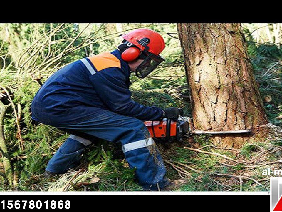شركة قطع الاشجار بالامارات