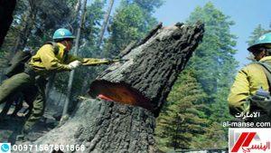 شركة قطع الاشجار فى العين