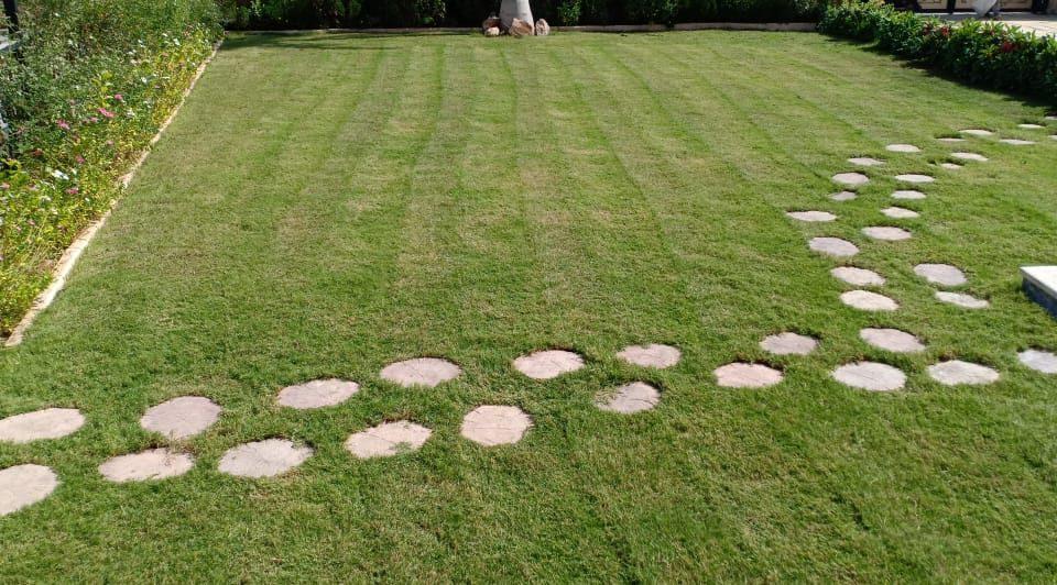 عشب طبيعي للبيع في الامارات